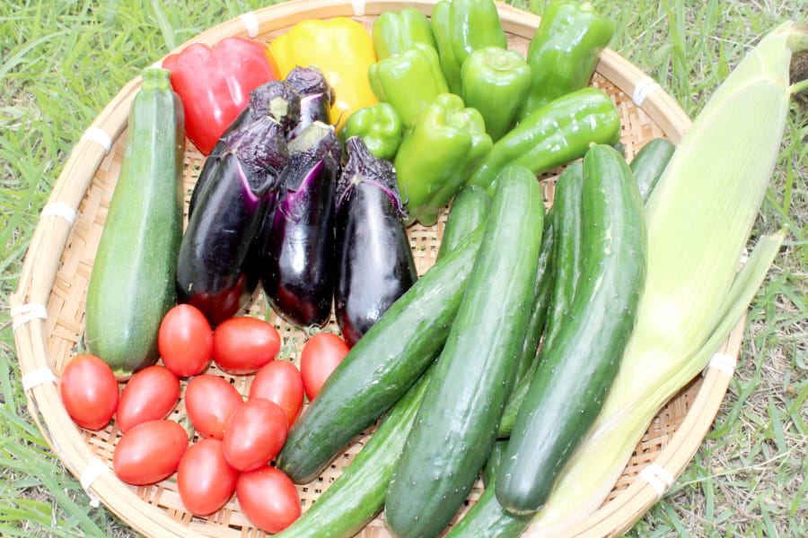 新鮮野菜の写真